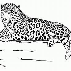 free printable coloring pages with animals 17261 grassland animals coloring pages coloring home