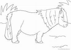 ausmalbild mit pony ausmalbilder pferde viele