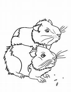 free guinea pig coloring page