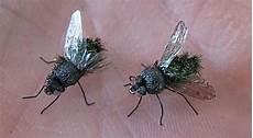 chasser les mouches 13 astuces naturelles pour chasser les mouches d 233 finitivement chasser les mouches faire fuir