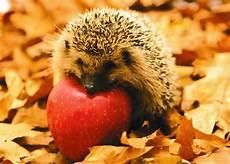 Ausmalbilder Igel Mit Apfel Postkarte Tiere Quot Gartenfreund Igel Mit Apfel