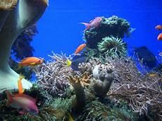 malvorlagen unterwasser tiere um unterwasser landschaft foto bild tiere zoo wildpark
