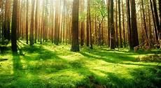 Gambar Wallpaper Pemandangan Hutan Kumpulan Wallpaper