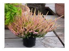 Grabbepflanzung Herbst Winter Pflanzen Versand Harro S