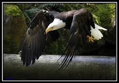 Worlds Biggest Bird  Welcome To World Amazing Gallery