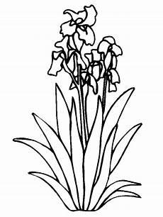 Blumen Malvorlagen Quotes Blumen Malvorlagen Malvorlagen1001 De