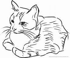 Katze Als Malvorlage Ausmalbilder Katzen