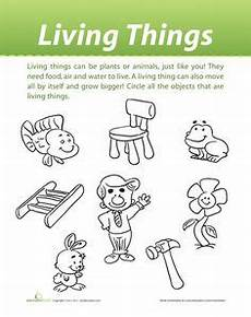 science worksheet living things 12282 1000 images about grade 1 science social studies on community helpers plants and