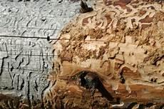feuchtes holz erkennen holzwurm im dachstuhl bek 228 mpfen