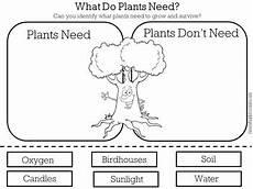 needs of plants worksheets kindergarten 13579 plants needs worksheet activity by green apple lessons tpt
