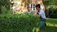gro 223 e thuja schneiden thuja hecke schneiden konifere