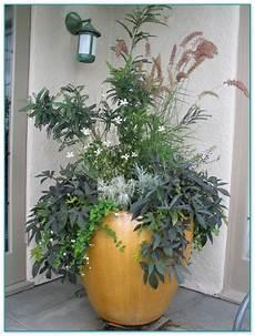 pflanzen für vorgarten hohe k 252 bel bepflanzen