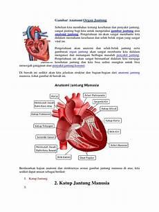 Gambar Anatomi Jantung Dan Fungsinya Koleksi Anatomi