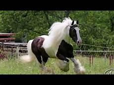 Schöne Pferde Bilder - 12 sch 246 ne pferde bilder wieder holen sich