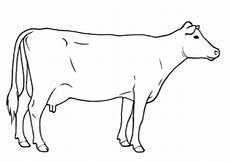 Condition Scoring Dairy Cow
