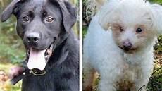 spa mulhouse chien photo de chien a adopter a la spa photos de nature