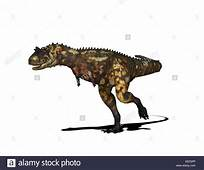 Carnotaurus Stock Photos & Images  Alamy