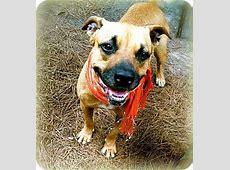 Precious   Adopted Dog   Groveland, FL   Black Mouth Cur