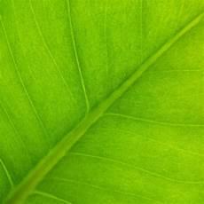 was bedeutet synthese was ist fotosynthese und welche bedeutung hat diese sciodoo