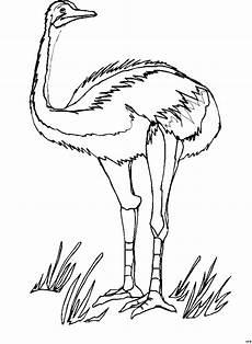 emu stehend ausmalbild malvorlage tiere