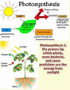 plants and photosynthesis worksheets 13616 plant cycle worksheet 4th grade science olympiad
