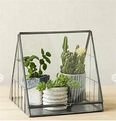 große pflanzen fürs wohnzimmer pin auf sukkulents