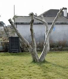 taille du figuier jardipartage