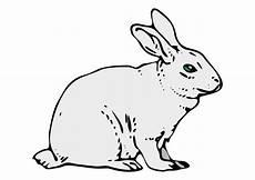 bild kanin bild 10201