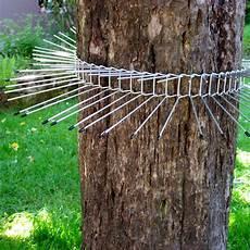 katzenabwehrgürtel selber bauen schwegler katzenabwehrg 252 rtel klein 70 cm vogelschutz