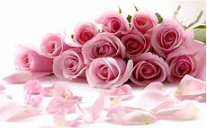 delicate beautiful light pink roses wallpaper gallery yopriceville high quality images and