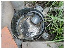 Kitchen Grease Water by Grease Trap