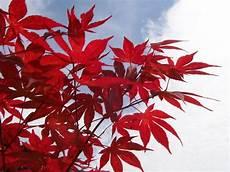 strauch rote blätter bild 12 aus beitrag im blumenpark dehner