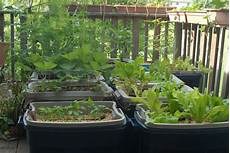 Garden In Containers