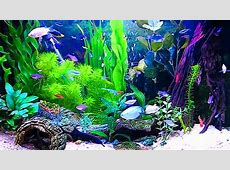 Amazing HD Aquarium ScreenSaver Free Windows and Android