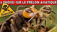 piqure frelon asiatique le frelon asiatique dangereux ou non eublepharis