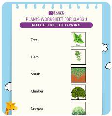 types of plants worksheets for grade 2 13744 evs class 1 worksheets for free and start learning