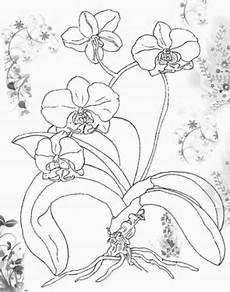 malvorlagen orchideen gratis coloring and malvorlagan