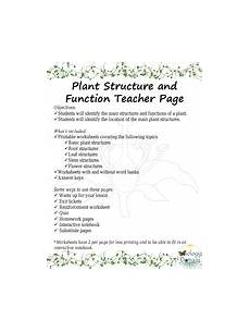plant structure and function worksheets by biologydomain teaching resources