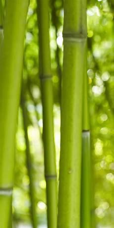bambus tapete fototapete bambus vlies tapete m0003 ebay