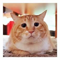 Foto Profil Gambar Kucing Lucu 81021 Nama Untuk Kucing