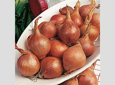 Shallots Meloine (0.4Kg)   Spring Planting Onions and