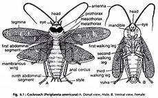 Termite Pest Controls Cockroach Diagram