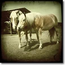 fotos auf alt trimmen wege zum pferd 187 archiv 187 pferdefotos mit dem handy