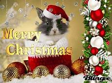 merry christmas bunny pictures photos and images for facebook pinterest and