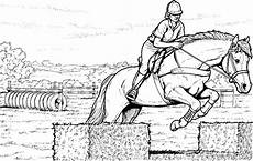 ausmalbilder pferde ausmalen ausmalbilder pferde springreiten ausmalbilder pferde
