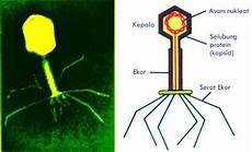 Terdiri Dari Apa Sajakah Struktur Tubuh Virus