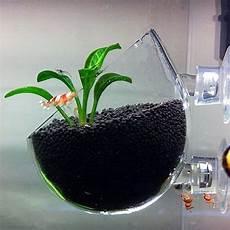 glas für gewächshaus plant glass pot aquarium deko glasvase f 252 r pflanzen