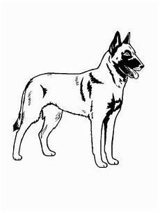 hund beglian malinois ausmalbild malvorlage hunde
