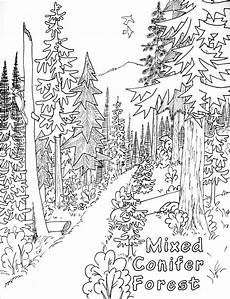 nature coloring pages free 16341 free printable nature coloring pages for coloring pages nature tree coloring page