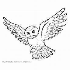 coloring snowy owl hedwig picture liked on polyvore